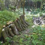 シイタケの榾木を本伏せしたよ